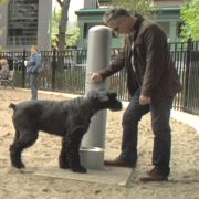 Going to the Dogs: A Growing Community Trend