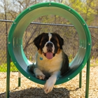 Raise the Woof!: Incorporate Dog-Friendly Amenities