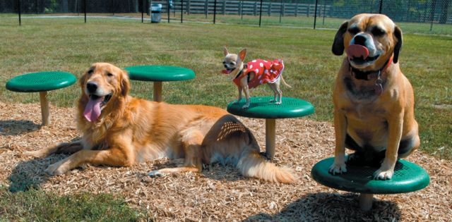 Tail-Wagging Fun: Design & Outfit an Effective Dog Park