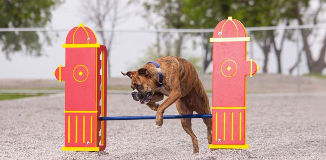 Canine Comforts: Implement Best Practices, Deploy New Ideas in Dog Parks